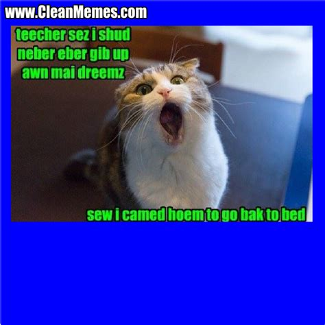 Clean Cat Memes - funny cats with captions tattoo