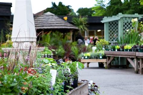 The Plantation Garden Centre by Plenty Of Colourful Plants To Choose From
