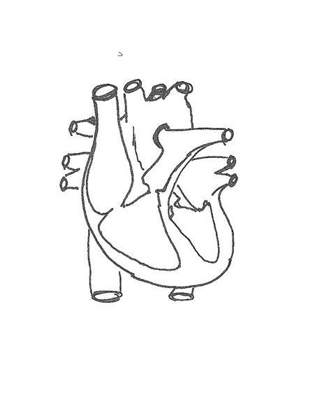 simple human heart drawing  getdrawingscom   personal  simple human heart drawing