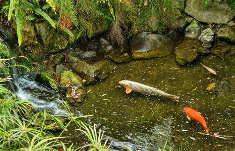 file fish pond at the gibraltar botanic gardens jpg