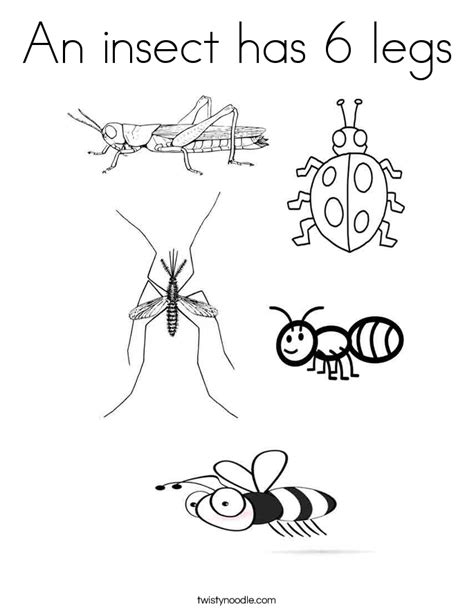 Insects Coloring Pages an insect has 6 legs coloring page twisty noodle
