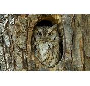 Wallpaper Tree Bird Bark Sunny Owl The Hollow Images