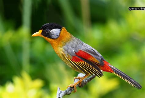 top 25 wild bird photographs of the week 54