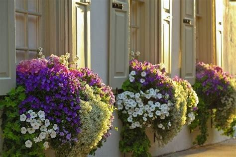 fiori con la u fiori per fioriere vasi