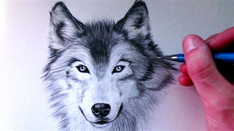 wolves drawings how to draw a wolf