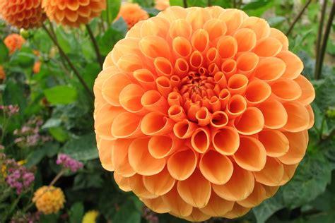 fiori autunnali matrimonio quali fiori scegliere per un matrimonio in autunno