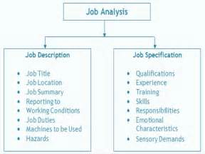 Jobs By Degree by Job Description Amp Job Specification