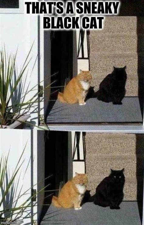Sneaky Cat Meme - the cat named shadow imgflip