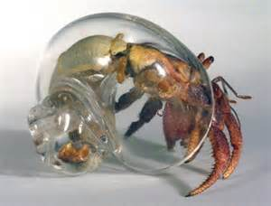 officially creeped out glass hermit crab shells we know