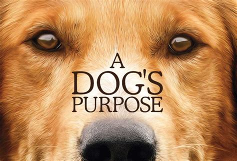 dogs purpose a s purpose toby pictures to pin on pinsdaddy