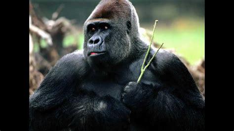 imagenes realistas de animales espectaculares im 225 genes de animales preciosos youtube