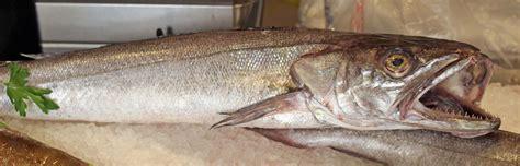 come cucinare il nasello fresco stefano pescherie nasello cucinare nasello pesce per