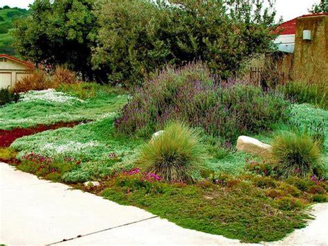 alternative to grass in backyard best 25 lawn alternative ideas on pinterest thyme plant