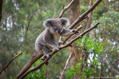 8 Animals From Australia Id To See by Australian Animals List With Pictures Facts Information