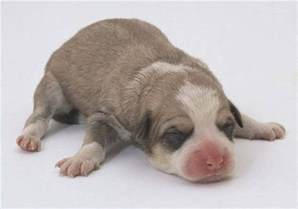 Puppies In How To Take Care Of Newborn Puppies That Are Outside