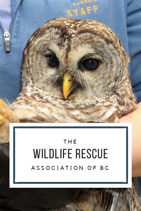 media wildlife rescue association of bc