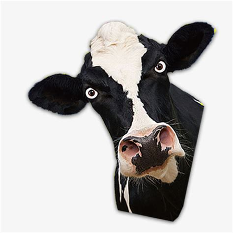 scow head cow head cow clipart head clipart dairy cow png image