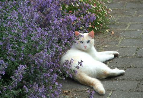 cat garden cat pictures