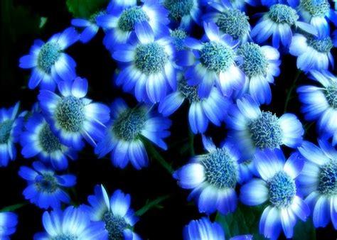 interesantes y bonitos fondos de escritorio de flores flores hermosas para fondo de pantalla fondos de