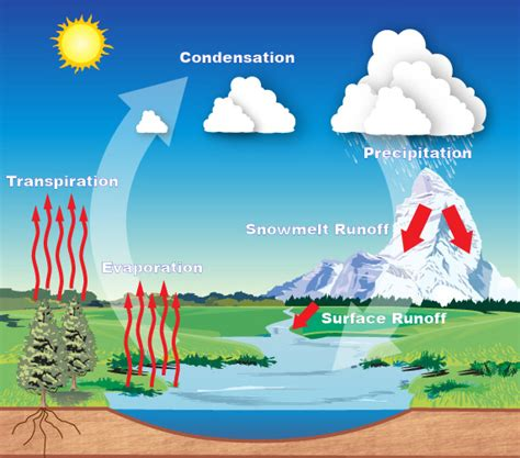 water cycle home
