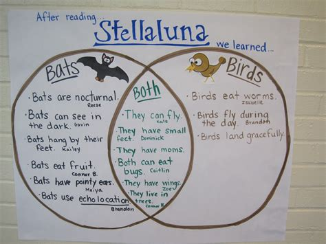 stellaluna venn diagram higher order thinking done after reading quot stellaluna quot comparing and contrasting bats and birds