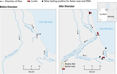chicago river map change to river s flow considered to stop carp npr