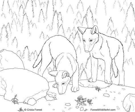 intricate wolf coloring pages intricate coloring pages top coloring pages