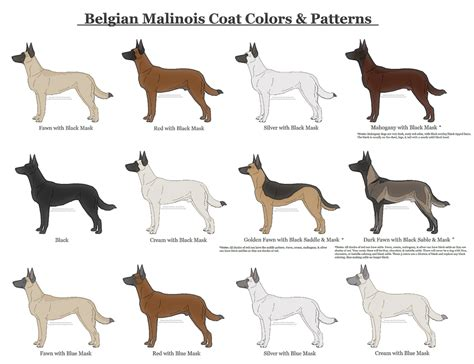 dog color pattern names image gallery malinois colors