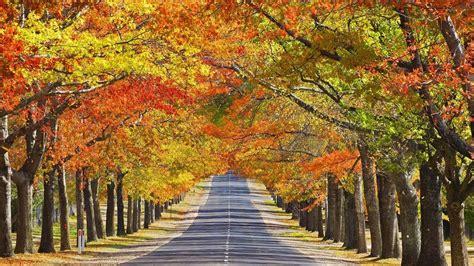 autumn season fall season desktop 4 seasons