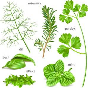 Various herbs vector Free vector in Encapsulated