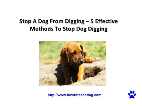 how to stop dogs from digging stop a from digging 5 effective methods to stop digging
