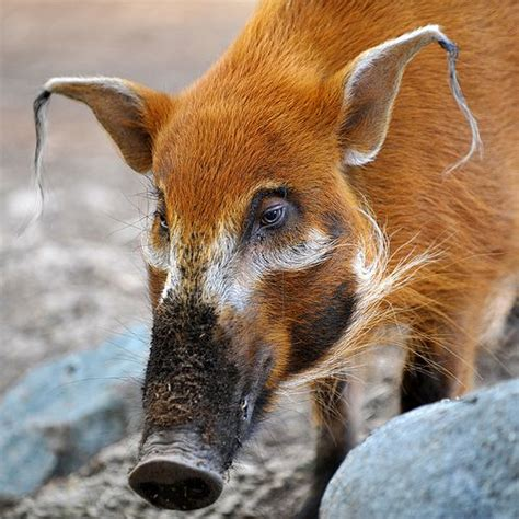 how sprinkle the pig escaped the river of tears a story about being apart from loved ones strengths therapeutic children s books books 1000 ideas about pig family on forest