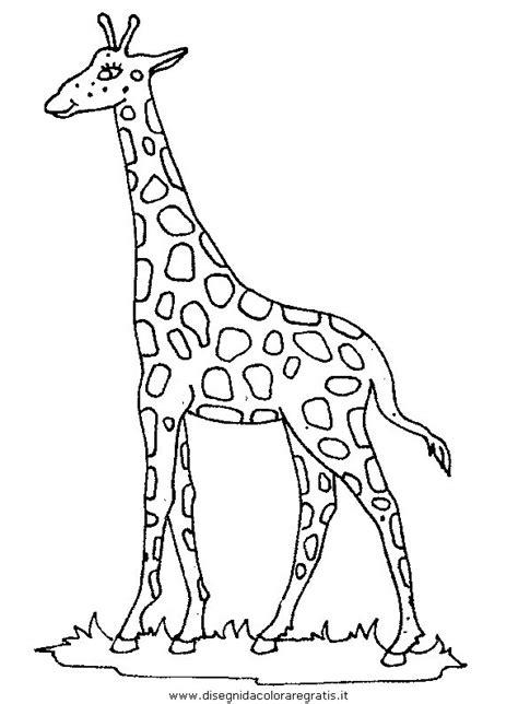 imagenes de jirafas sin colorear disegno giraffa 46 animali da colorare