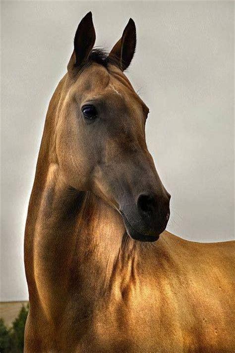 nice hourse nice looking horse nice looking horse pinterest