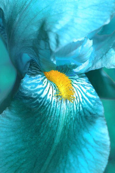 aqua flower tattoos and photo 1000 ideas about iris flower tattoos on iris
