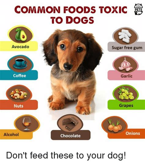 are onions poisonous to dogs common foods toxic to dogs avocado sugar free gum coffee garlic nuts grapes