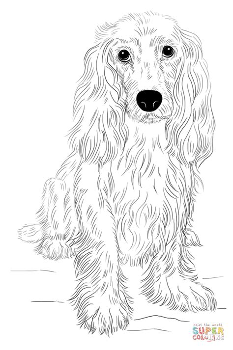 english cocker spaniel coloring page free printable