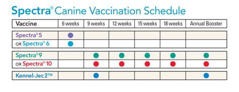 puppy vaccine schedule puppy vaccination schedule chart puppy vaccines schedule charts enom warb co