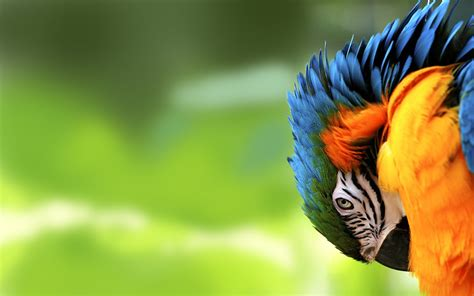 wallpapers macaw bird wallpapers parrot hd wallpapers parrot hd pictures for desktop hd