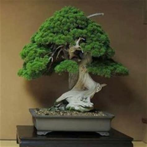 Bonsai Boom Onderhouden by Bonsai Bonsai Empire