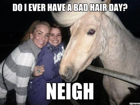 Nice Hair Meme - ridiculously funny animal memes for 2013 animals zone