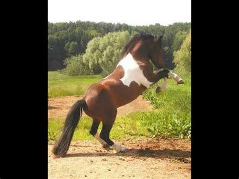 esel beim decken pferde und esel doovi