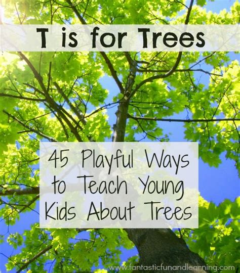 tree activities tree activities for