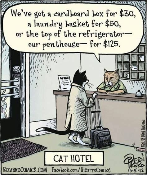 Funny Hotel Memes - cat hotel the far side is closer than we think pinterest