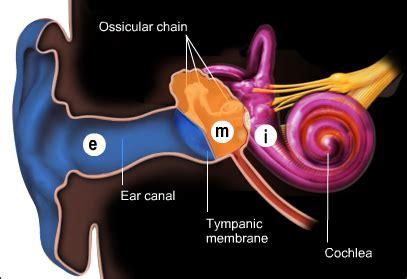 ear middle ear cochlea cochlea