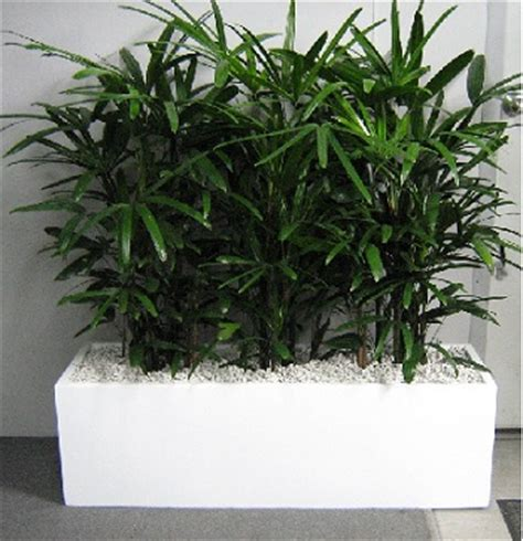 Planter Box Plants by Containers Planter Boxes Gaddys Indoor Plant Hire