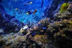 image gallery deep ocean