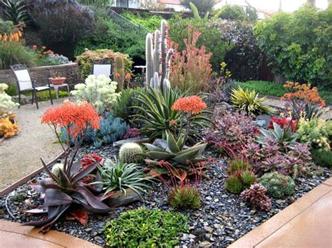 beautiful succulent garden extraordinary landscapes in san luis obispo county succulent