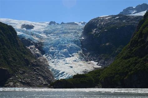 glacier bay boats out of business raft of sea otters picture of kenai fjords tours seward