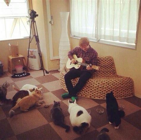 ed sheeran cats ed sheeran everybody